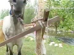 dogs humping compilation