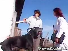 Beastiality dog
