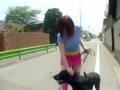 Sacando leche al pony