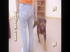 Dog gonne