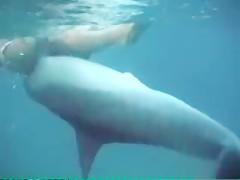 Sexy Dolphin Gangnam Style