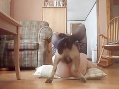 Nuestro perro es mi amante